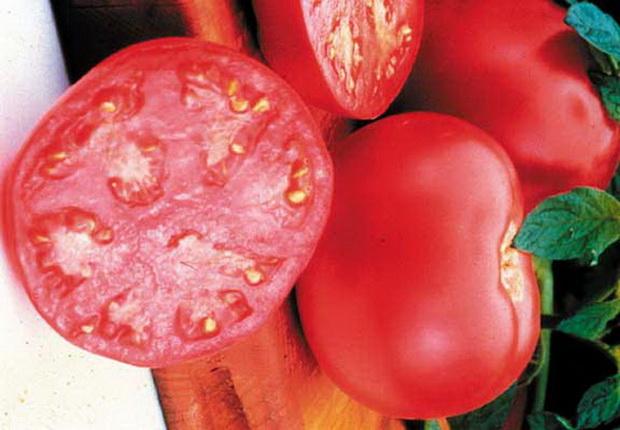 Сорт томата: Пинк гел   f1