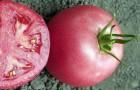 Сорт томата: Пинк уникум f1