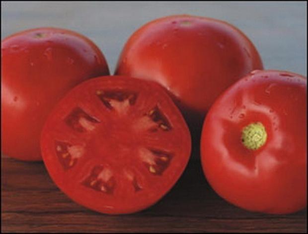 Сорт томата: Платинум   f1