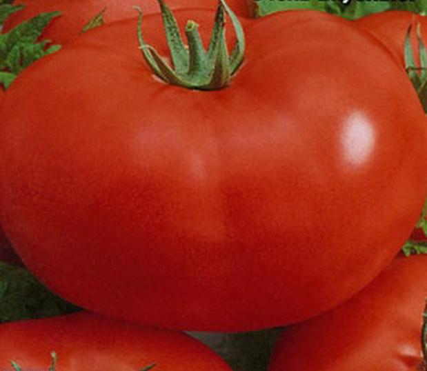 Сорт томата: Плюшкин   f1