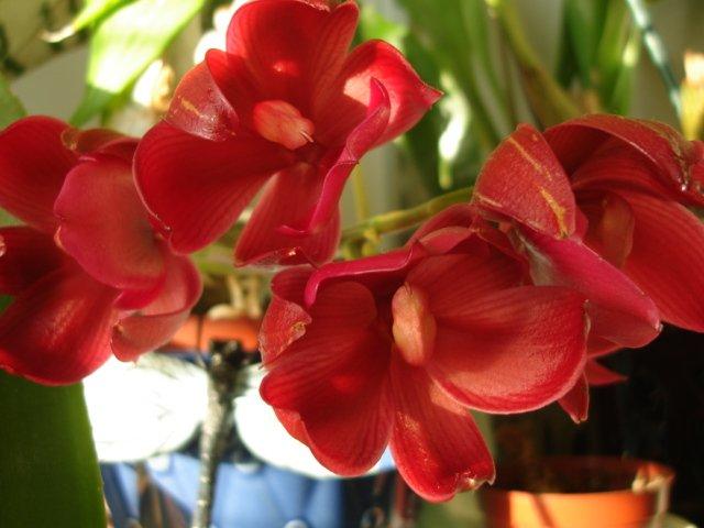 Почему растение не цветет?