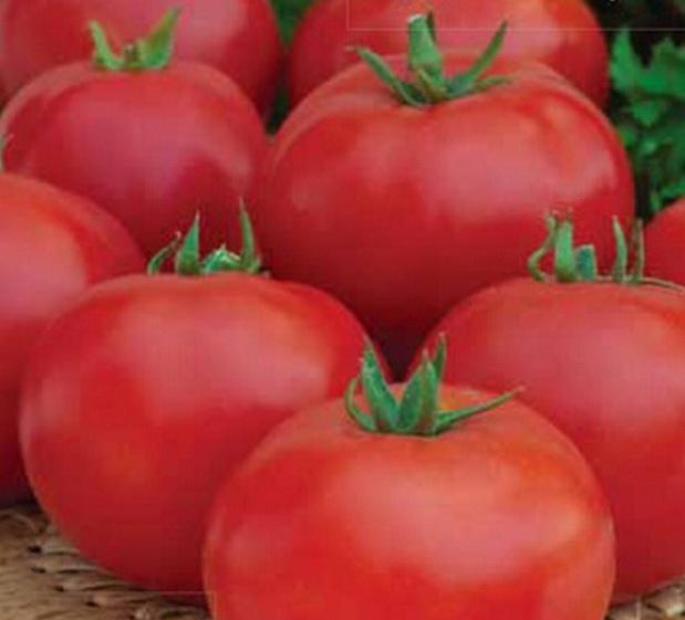 Сорт томата: Подарок кубани