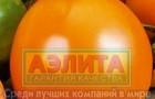 Сорт томата: Поддубный