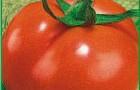 Сорт томата: Полбиг f1