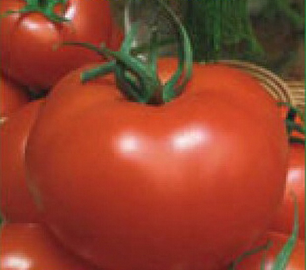 Сорт томата: Полфаст   f1