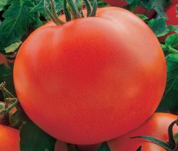 Сорт томата: Полярник