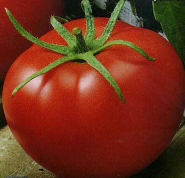 Сорт томата: Полюс