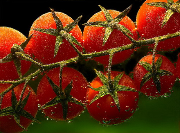 Сорт томата: Понт   f1