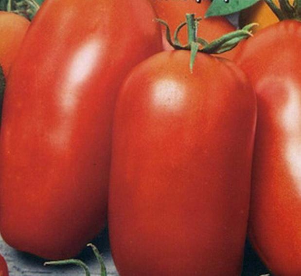 Сорт томата: Попробуй   f1