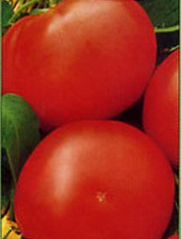 Сорт томата: Портос   f1