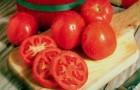 Сорт томата: Посьет
