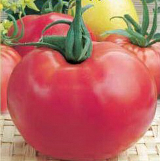 Сорт томата: Посейдон   f1