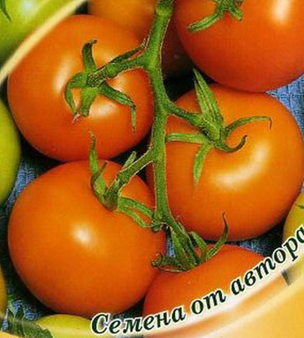 Сорт томата: Познань
