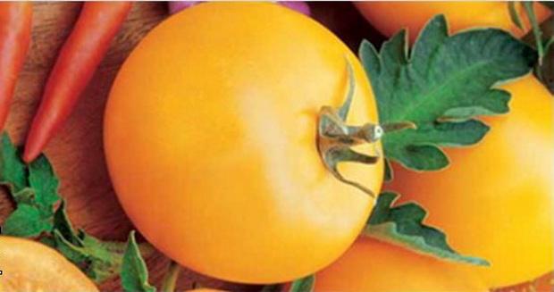 Сорт томата: Прайд   f1