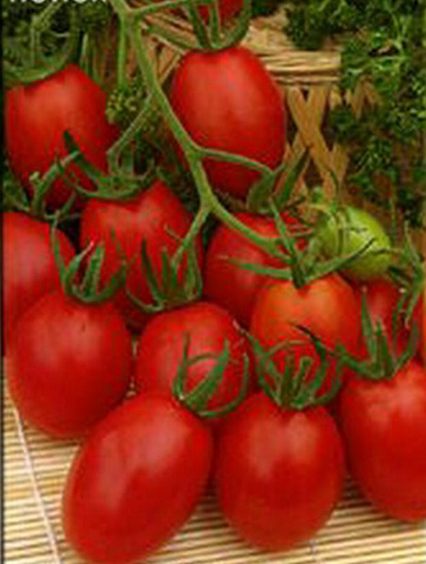 Сорт томата: Праздничный