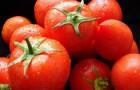 Сорт томата: Премьер