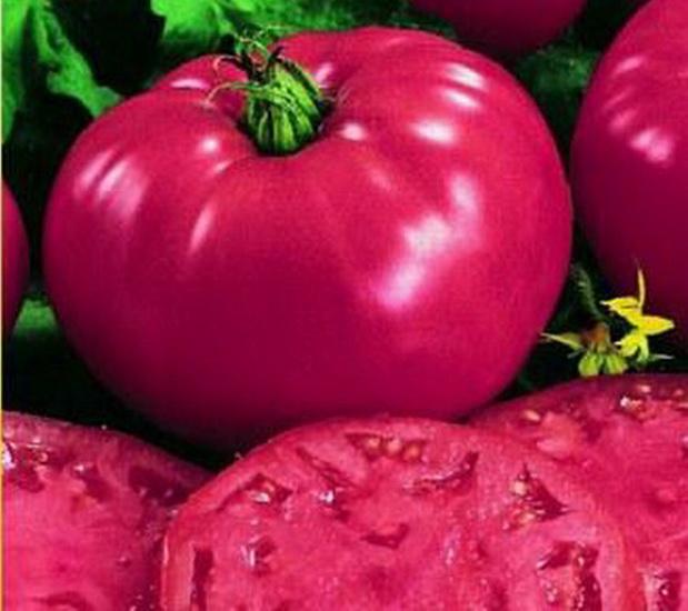 Сорт томата: Президент 2   f1