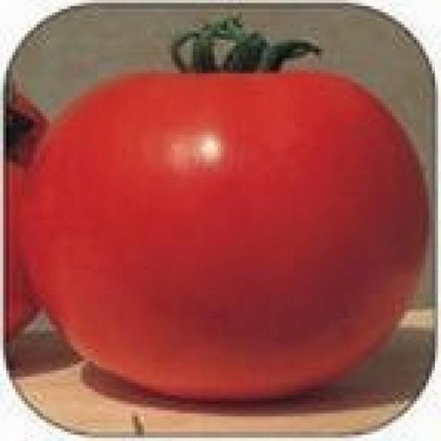 Сорт томата: Прима дона   f1
