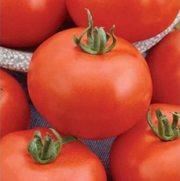 Сорт томата: Приполярный