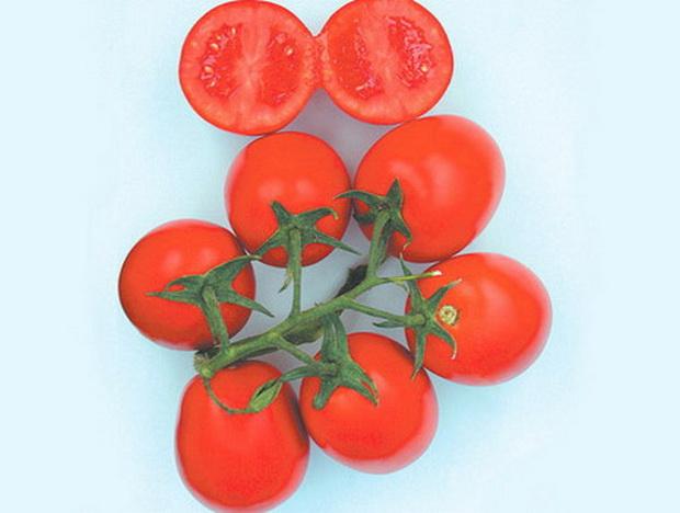 Сорт томата: Прогресс