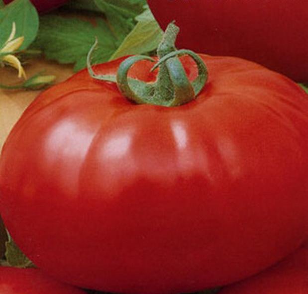 Сорт томата: Птица счастья