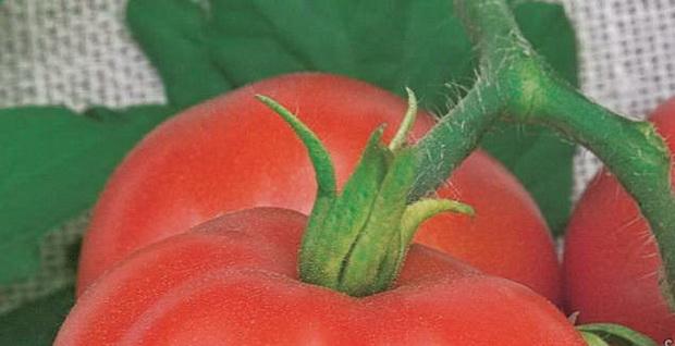 Сорт томата: Пятачок   f1