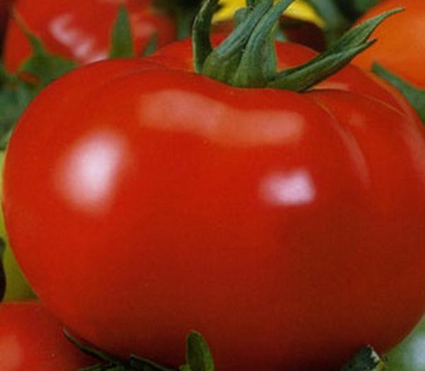 Сорт томата: Пышка   f1