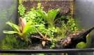 Растения в террариумах