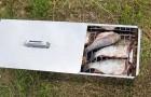 Рыба, копченная в коптильной печи