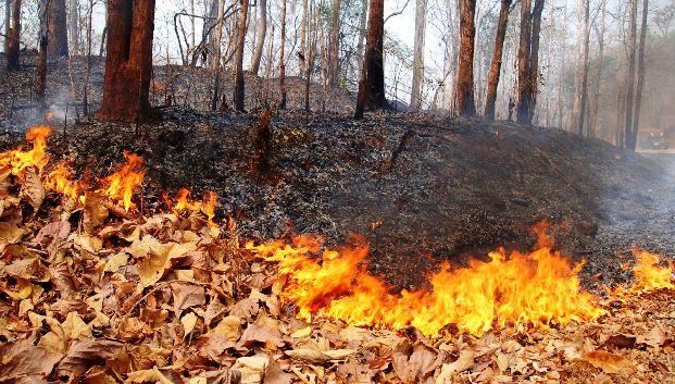 Семена растений просыпаются после лесного пожара