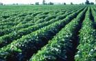 Соевые поля вместо лесов станут причиной голода