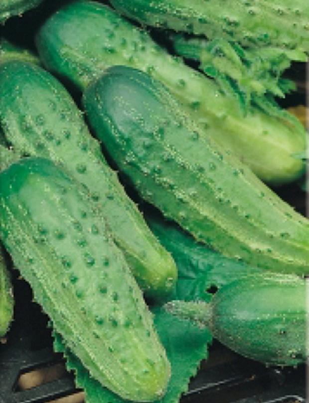 Сорт огурца: Соловей   f1