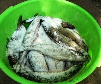 Сухой посол свежей рыбы