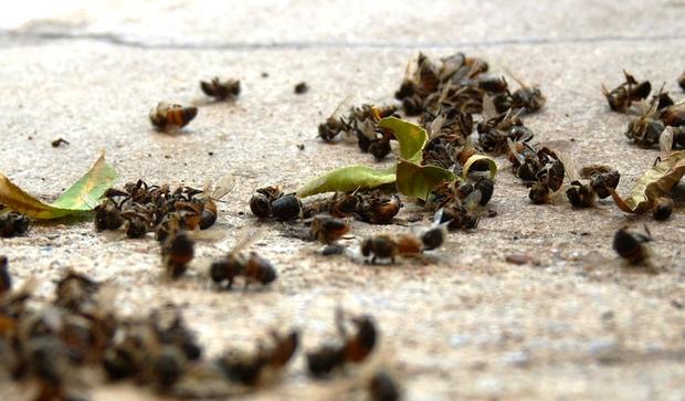 В США погибла треть всех пчел - страна под угрозой голода