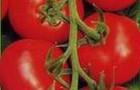 Сорт томата: Валет f1