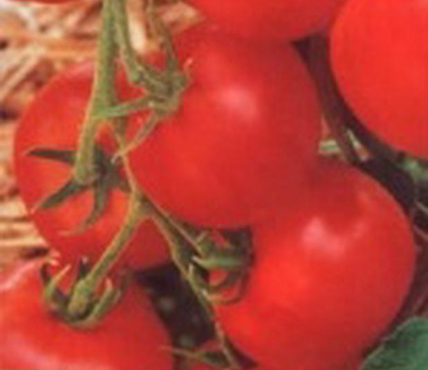 Сорт томата: Васильевна   f1