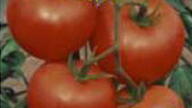 Сорт томата: Вдохновение   f1