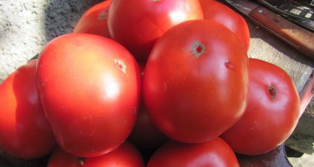 Сорт томата: Вечный зов