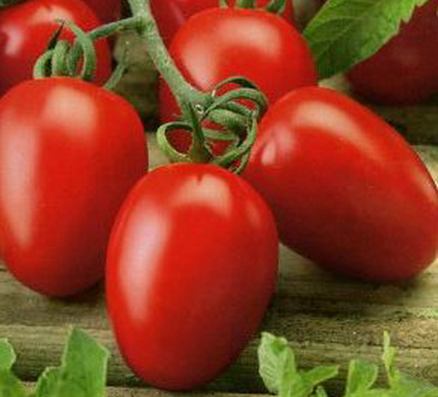 Сорт томата: Венета