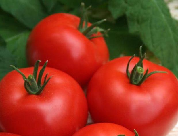 Сорт томата: Верлиока плюс   f1