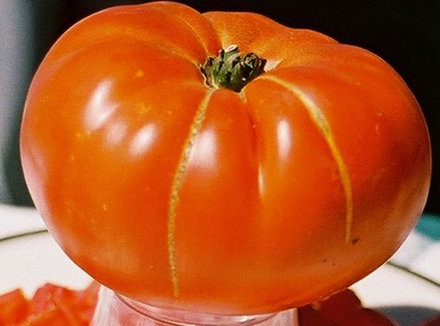 Сорт томата: Веста