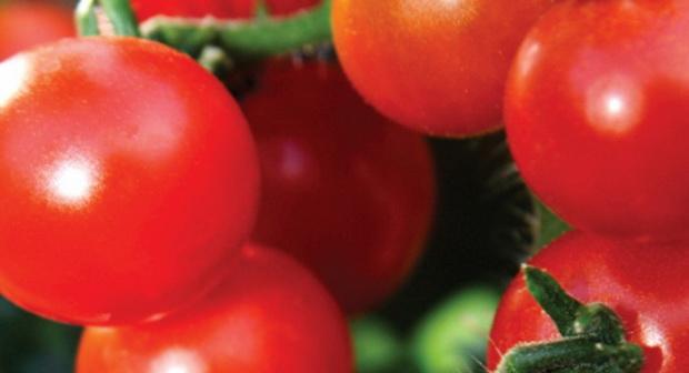 Сорт томата: Вишня красная