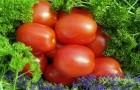 Сорт томата: Витязь