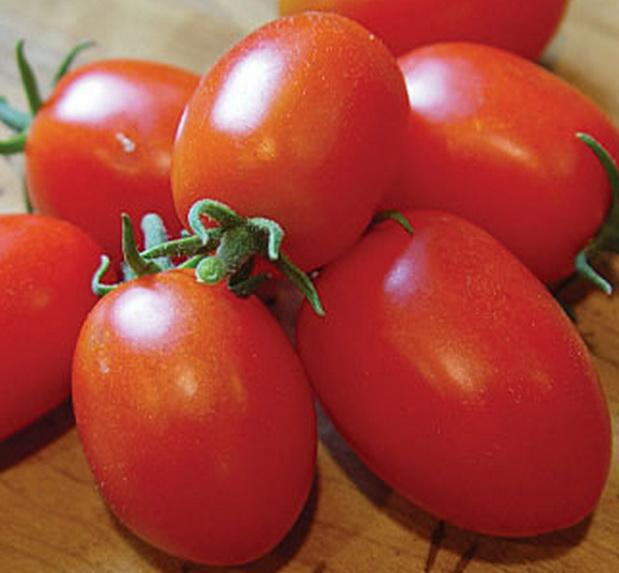 Сорт томата: Виват