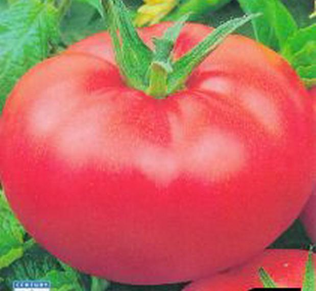 Сорт томата: Внучек   f1