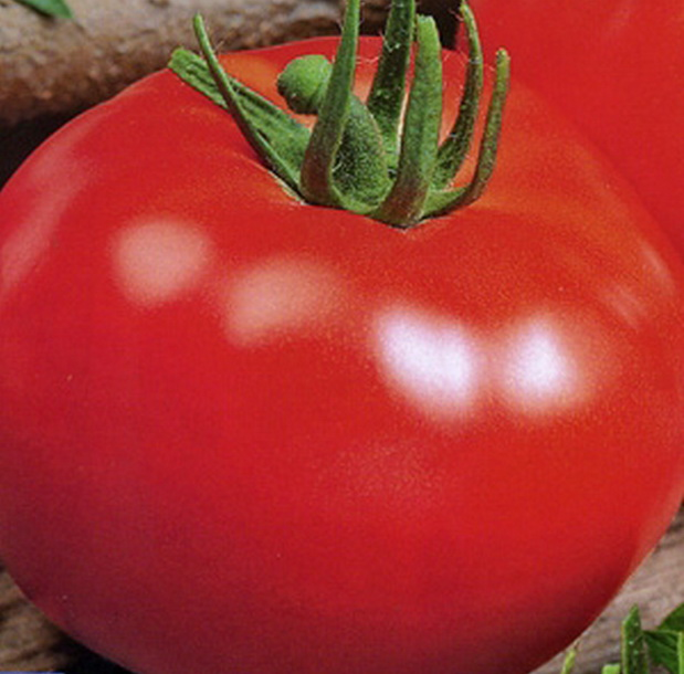Сорт томата: Волшебник