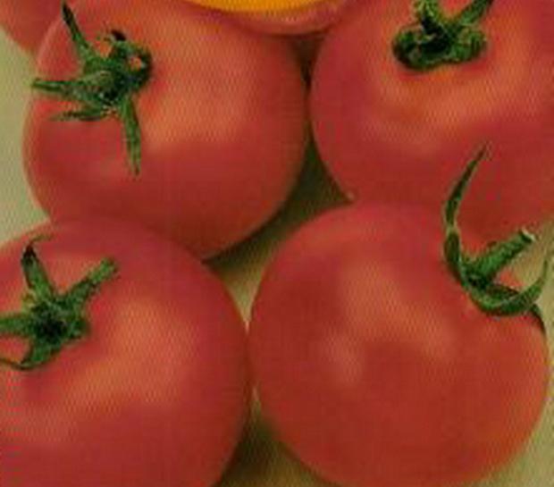 Сорт томата: Восход