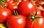 Сорт томата: Восточный базар f1