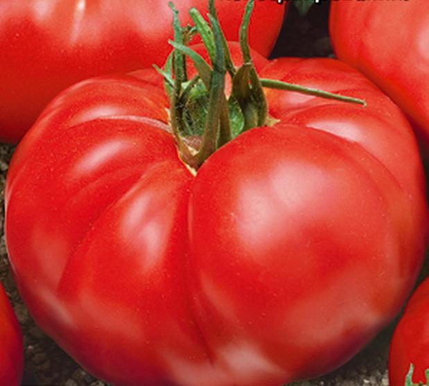 Сорт томата: Вовчик
