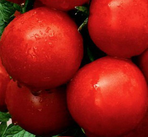 Сорт томата: Вспышка